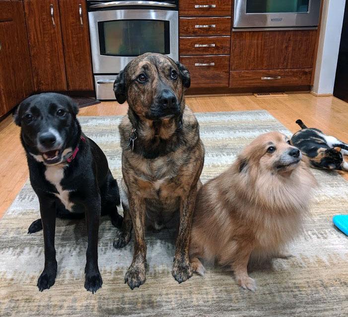 Kenzie, Figg and Eddie